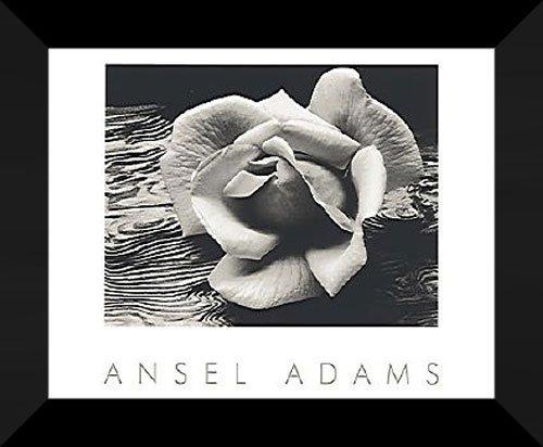 Ansel Adams Framed Art 24x20  Rose and Driftwood