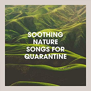 Soothing Nature Songs for Quarantine