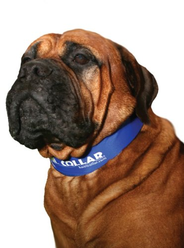 Kool Collar for dogs: photo
