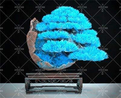 Ferry Neu! 50 Stück Mini Kiefer Bonsai Topf Landschaft Japanische fünf Nadel Pine Bonsai Miniascape Pinus Thun, DIY Hausgarten: 1
