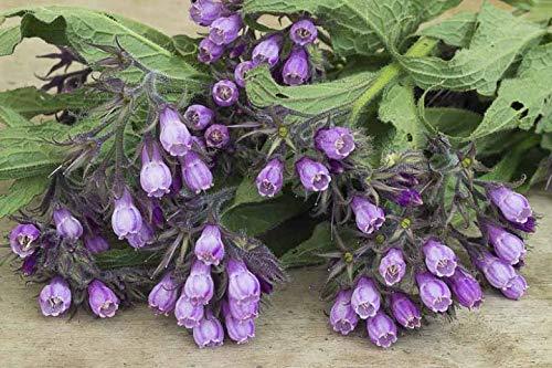 100 Rose Eden escalador de Semillas Semillas de Rose que sube Bonsai jardín de flores y plantas Semillas