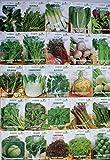 Go Garden Roket - Coltivata: Semillas de hortalizas verdes mejor calidad de Europa 26 Vareties para elegir