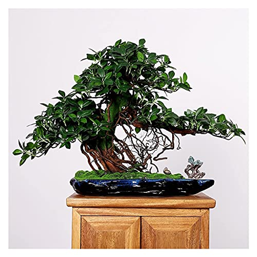 Albero bonsai artificiale Albero di banyan artificiale Foglie realistiche Piante in vaso finte Gru e pietre selvatiche in ceramica Vasi da fiori blu scuro Decorazione per la casa e l'ufficio Albero di