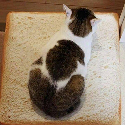 Daxerg Brood, voor katten, honden, brood, brood, brood, brood, diermatten, zachte warme matras, bed voor katten, honden