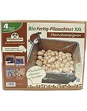 XXL Bio Steinchampignon 10 kg Komplettset - Pilze selber züchten