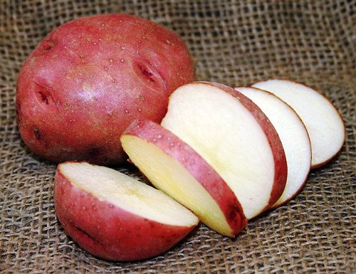 NORLAND RED Potato - 8 Certified Seed (Tubers)