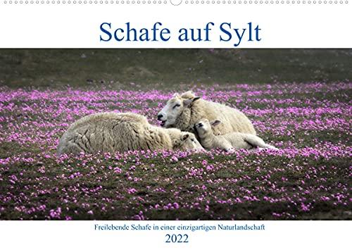 Schafe auf Sylt (Wandkalender 2022 DIN...