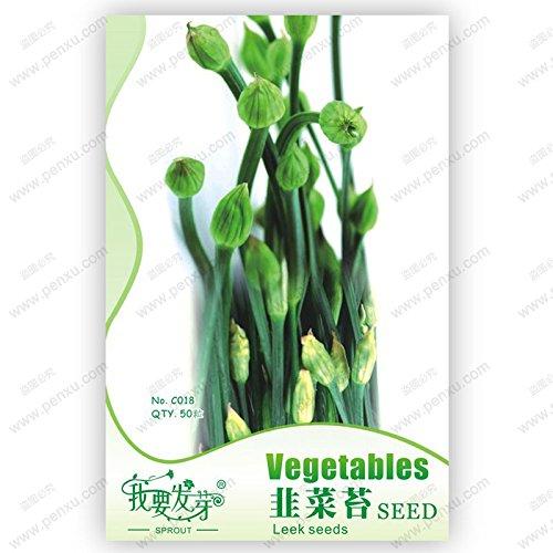 Paquet d'origine 50 graines / Paquet, ciboulette chinoise mousse, organique potager balcon bonsaï graines de poireaux verts