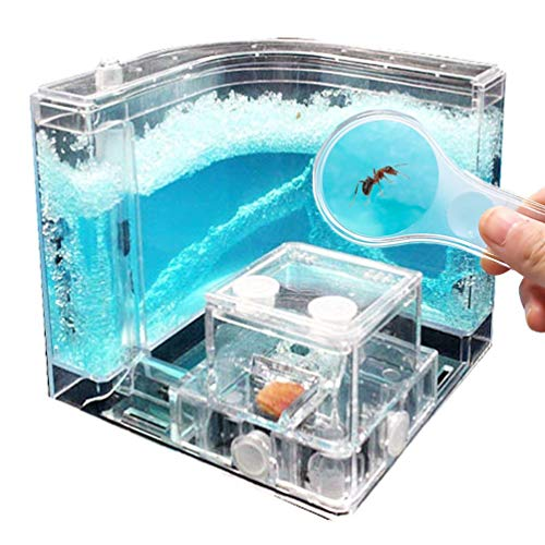 NAVADEAL Ant Farm Castle, Ant Habitat Science Learning Kit, Best STEM 2021 Educational Kids Toy, Study Insect Behavior at Home & School, with Plant Based Blue Gel 3D Maze Ecosystem, Kids Gift Idea