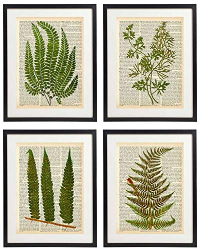 IDIOPIX Fern Art Prints Vintage Botanical Wall Art Set of 4 Prints UNFRAMED No.6