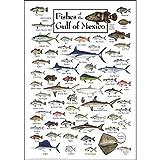 Earth Sky + Water Poster - Fische des Golf von Mexiko