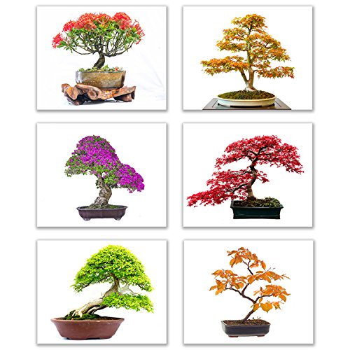 Infinity Creations Inspirational Tree Wall Art - Bold, Beautiful, Bright Bonsai Trees (Set of 6): Art of Nature Decor Unframed Poster Prints (8'x10')