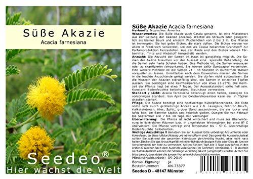 Seedeo® Süße Akazie (Acacia farnesiana) 20 Samen
