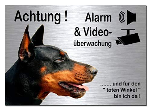 Dobermann-Alarm + Videoüberwachung-Hund-Schild-Hundeschild-30 x 20 cm-Aluminium Edelstahloptik-Hunde-Tierschild-Warnschild-Hinweisschild (133-20 -30 x 20 cm mit Klebepads)