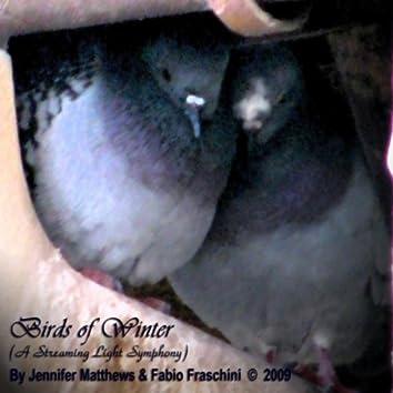 Birds of Winter (a Streaming Light Symphony)