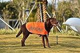 Radiancy Inc' waterproof dog coat Hi Visibility Dog Vest Dog Safety Vest double-deck rain dog vest hi vis dog coat (XXL, Orange)