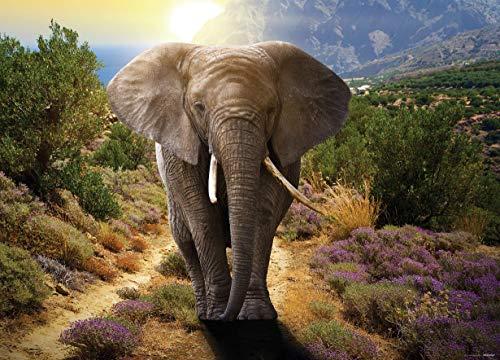 AG Design olifant, vlies fotobehang 1-delig, meerkleurig 0,1 x 160 x 110 cm