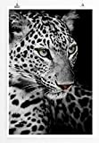 Eau Zone Home Bild - Tierbilder – Leopard mit grünen