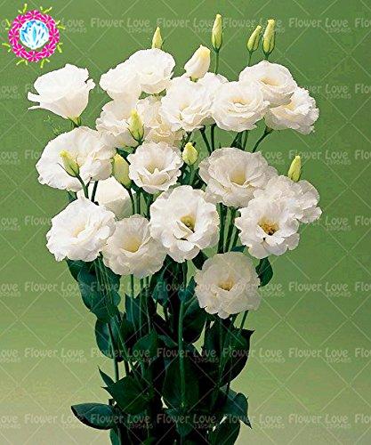 200PCS Rare jaune Eustoma Graines vivaces Graines de fleurs Balcon fleurs en pot Plante vivace Bonsai Jardin des plantes