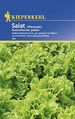 Salat Australischer gelber