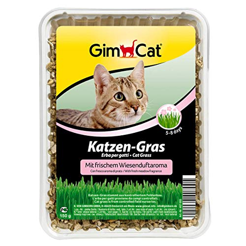 GimCat Katzen-Gras mit Wiesenduftaroma - Saatmischung aus kontrolliertem Feldanbau für schnelle Aufzucht - 1 Schale (1 x 150 g)