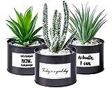Odezza 3er Set Kunstpflanze klein im Topf schwarz | Künstliche Pflanzen im Topf 10 x 16 cm | 3 Stück Künstlicher Kaktus grün | Sukkulente Deko Kunstpflanzen im Topf