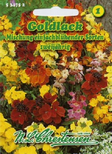 Cheiranthus cheiri, Goldlack, Mischung einfachblühender Sorten duftend