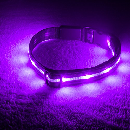 Blazin' Safety LED Dog Collar – USB Rechargeable with Water Resistant Flashing Light – Medium Purple