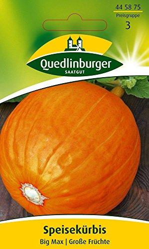 Kürbissamen - Speisekürbis Big Max von Quedlinburger Saatgut