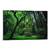 YRTW 5 Amazonas Regenwald Naturlandschaft Poster Dekoration
