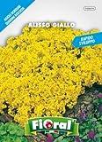Buste in carta 11,5 x 16 cm con bustina ermetica interna ampia gamma di sementi per creare un giardino pieno di colori e profumi. Oltre alle varietà più popolari, sono presenti anche una serie di miscugli che permetteranno la creazione di fioriture m...