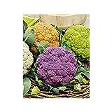 Risitar Graines - 50pcs Chou-fleur mauve/orange/vert Mélange de 3 variétés colorées Bio, Graines de légumes résistante au froid