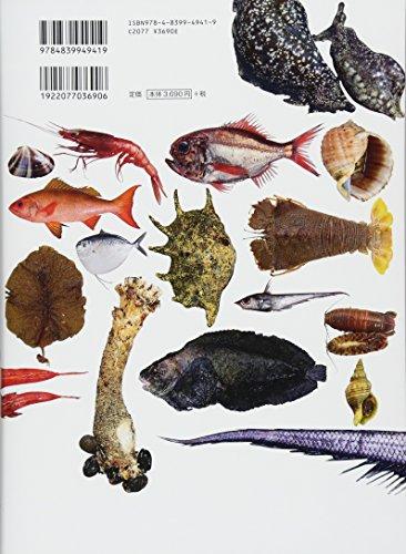 美味しいマイナー魚介図鑑(よみ:おいしいマイナーぎょかいずかん)