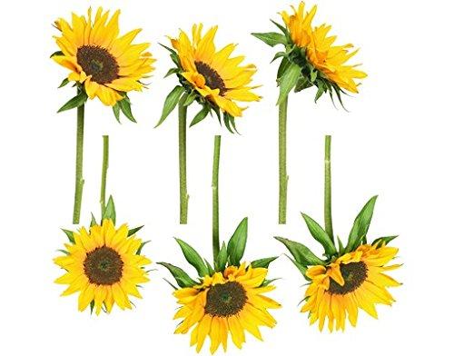 Apalis Fenstersticker Fensterfolie Sonnenblumen Fensterbilder HxB: 35 x 35cm