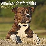 American Staffordshire Terrier - Amstaff 2020: Original Avonside-Kalender [Mehrsprachig] [Kalender] (Wall-Kalender) - Avonside Publishing