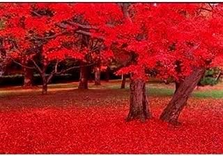 Best carolina maple tree Reviews