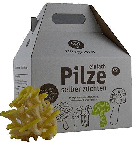 Pilzzucht-Set Limonenseitling