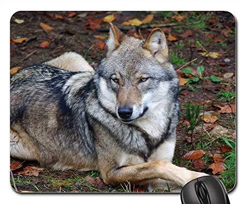 Yanteng Tappetini per Mouse da Gioco, Tappetino per Mouse, Animale Selvatico di Wolf Animal Predator Zoo Wildlife Park