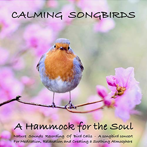 Calming Songbirds - A Hammock for the Soul: Nature Sounds Recording Of Bird Calls - A Songbird Concert for Meditation, Relaxation and Creating a Soothing Atmosphere