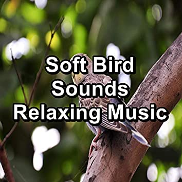 Soft Bird Sounds Relaxing Music