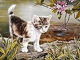 Kits de gato de color Pintura al óleo por números Figura Pintura acrílica Dibujo sobre lienzo Pintado a mano para adultos Juego de niños Decoración para el hogar A2 50x70cm