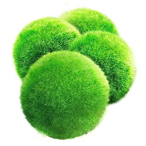 Luffy Giant Marimo Moss Balls, estéticamente hermosas plantas vivas, crean un entorno saludable, bolas de juego de bajo mantenimiento, camarones y caracoles Love Them, paquete de 4