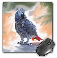 3dRose LLC 8 x 8 x 0.25インチ マウスパッド アフリカングレー オウム (mp_4030_1)