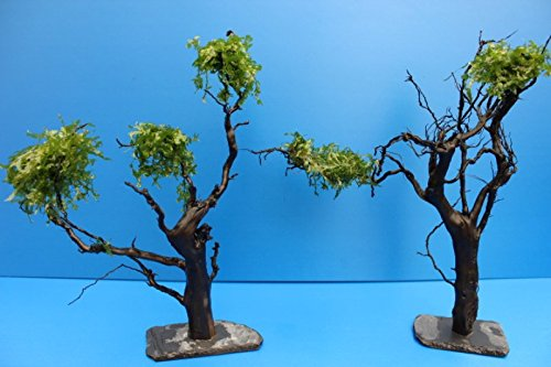 ZAC Wagner Moorkienwurzel XL 25-30cm bepflanzter Moorkien Garnelenbaum auf Schiefer Moorkienwurzeln Wurzel Moorkienholz