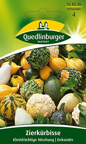 Quedlinburger Zierkürbis \'Kleinfruchtiger Mix\', 1 Tüte Samen