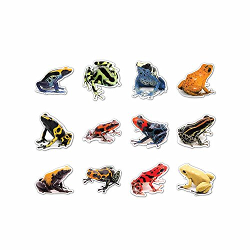 Poison Dart Frog Vinyl Decal Set - Indoor and Outdoor use!