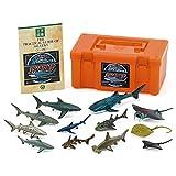 カロラータ サメの仲間 フィギュア ( 立体図鑑 ) 魚 リアル フィギュアボックス [解説書付き] 食品衛生法クリア 12種
