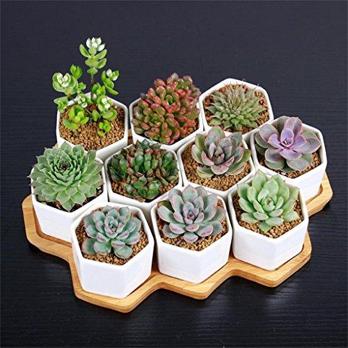 XYZ Ceramica Piante succulente vaso, Planter Fiore, Mini Vaso da fiori delicato durevole ( stile : B. )