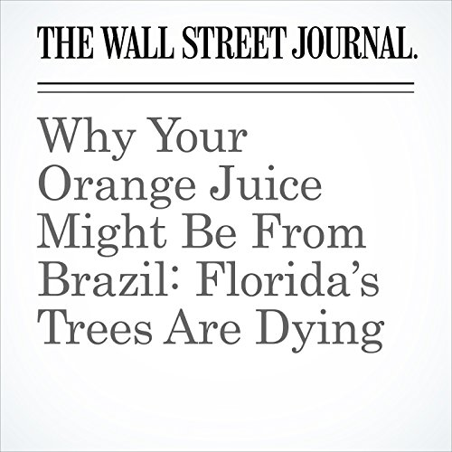 Why Your Orange Juice Might Be From Brazil: Florida's Trees Are Dying copertina