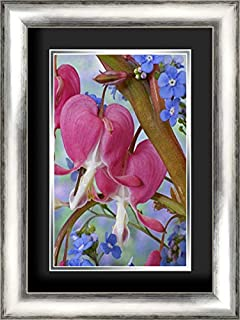 Bleeding Hearts and Brunnera Jack Frost Flowers 17x24 Silver Contemporary Wood Framed and Double Matted (Black Over Silver) Art Print by Paulson, Don